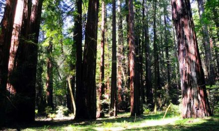 California Cap-and-Trade Scheme Could Endanger Rainforest Peoples