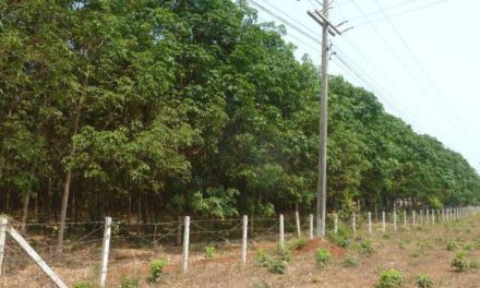 FAO definition must recognize that plantations are not forests!