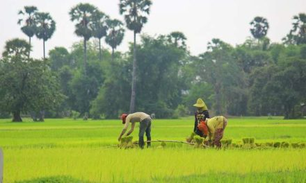 Current Paddy Rice Price Crisis: Wake-Up Call On a More Systemic Problem