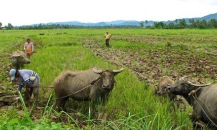 PARC to PNoy: Affirm Your Commitment to Full Implementation of Agrarian Reform