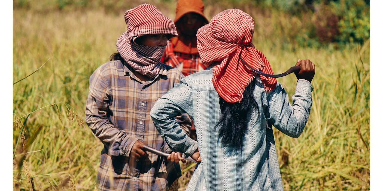 UN Declaration on Peasants' Rights: Challenging Neoliberal Globalization and Corporate Impunity