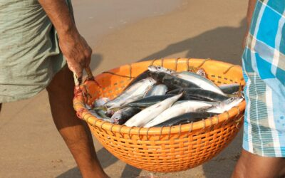 Impacts of COVID-19 on Small-Scale and Traditional Fishers and Fishworkers in India